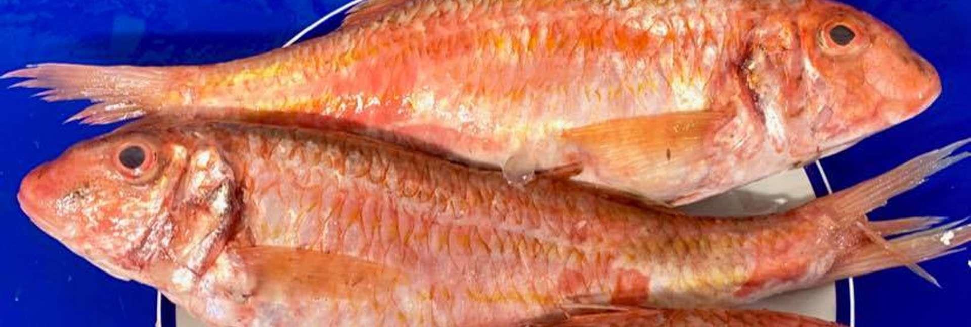 egansfish